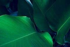Free Tropical Leaves Colorful Flower On Dark Tropical Foliage Nature Background Dark Green Foliage Nature Royalty Free Stock Image - 191195276