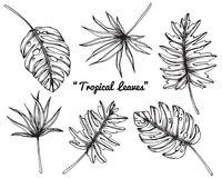 Tropical leaves drawing and sketch. Stock Image