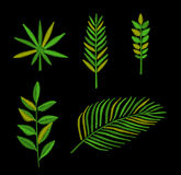 Tropical leaves embroidery Stock Photo
