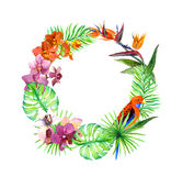 Tropical leaves, exotic birds, orchid flowers. Wreath frame. Watercolor. Tropical leaves, exotic birds and orchid flowers. Wreath frame. Watercolor Stock Photos