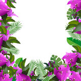 Tropical leaves. Floral design background Royalty Free Stock Photography