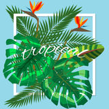 Tropical leaves. Floral design background Stock Photography