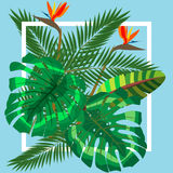 Tropical leaves. Floral design background Stock Photo