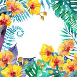 Tropical leaves. Floral design background. Royalty Free Stock Photography