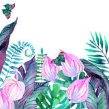 Tropical leaves. Floral design background. Stock Photo