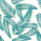 Tropical leaves. Floral design background Royalty Free Stock Images