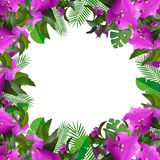 Tropical leaves floral design and text place Stock Images
