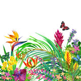 Tropical leaves and flowers background. Royalty Free Stock Images