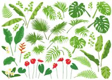 Tropical Leaves and Flowers Big Set. Vivid tropical flowers and green leaves isolated on white background. Tropic plant big set. Vector flat illustration vector illustration