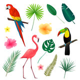 Tropical Leaves, Flowers and Birds Stock Image