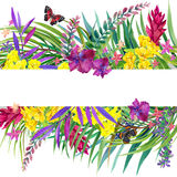 Tropical leaves, flowers and butterfly. Stock Image
