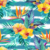 Tropical leaves and flowers. Floral design background. Stock Images