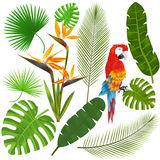 Tropical leaves, flowers and macaw vector Stock Photos