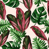 Tropical leaves and flowers of palm tree. Seamless pattern. Stock Image