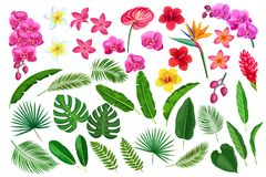 Tropical leaves and flowers. Vector set tropical leaves and flowers. Jungle exotic leaf philodendron, monstera, areca palm, royal fern and plumeria. Strelitzia vector illustration