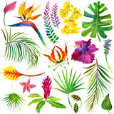 Tropical leaves and flowers . Stock Photography
