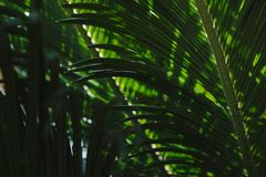 Tropical leaves in forest. stock photo