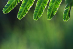Tropical leaves frame. Royalty Free Stock Photo