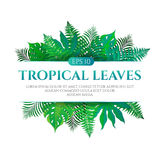 Tropical leaves frame design with place for text isolated on white background. Vector illustration in hand drawn cartoon style. Can be used for design your Stock Photos