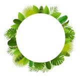 Tropical leaves frame. Floral jungle design background. Palm, banana, frangipany, monstera, strelitzia leaves Royalty Free Stock Images