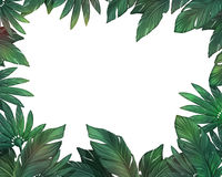 Tropical leaves frame Stock Images