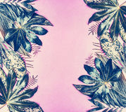Tropical leaves frame on pastel pink background royalty free stock photos