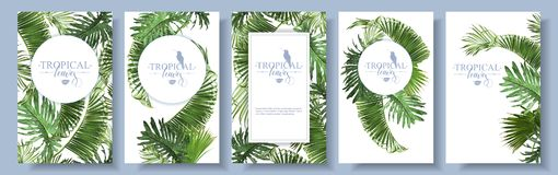 Tropical leaves frames Stock Images