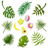 Tropical Leaves And Fruits Stock Photography