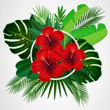 Tropical leaves with hibiscus flowers and white frame. On isolate background Royalty Free Stock Images