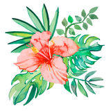 Tropical leaves isolated on white background.  plants: exotic flower hibiscus and leaves. Vector. Stock Photo