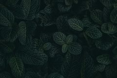 Tropical leaves in a jungle, dark and moody shot stock images