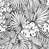 Tropical leaves momochrome pattern Stock Images