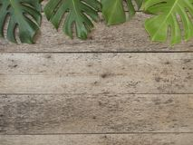 Tropical leaves Monstera on old wooden background royalty free stock photo
