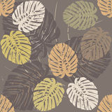 Tropical leaves of Monstera.  Stock Photo