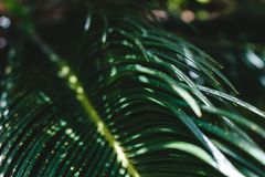 Green tropical leaves on a sunlight in the morning. stock images