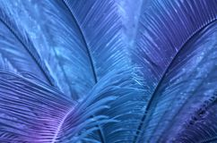 Tropical leaves at night stock image
