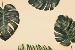 Tropical leaves on pale yellow background. Three beautiful shiny artificial monstera palm leaves and a fragment of tropical leaf on pale yellow background royalty free stock image