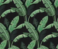 Tropical leaves palm. Seamless tropical leaves palm repeat wallpaper design Royalty Free Stock Photography