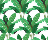 Tropical leaves palm. Seamless tropical leaves palm repeat wallpaper design Stock Photography