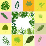 Tropical leaves palm summer exotic jungle green leaf vector illustration Royalty Free Stock Image