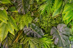 Tropical leaves pattern. Green leaf exotic plants seamless on a dark jungle background. Artistic photo collage for royalty free stock image