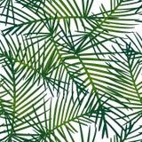 Tropical Leaves Pattern Seamless on White Background. Vector Illustration stock illustration