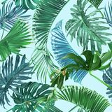 Tropical leaves pattern Royalty Free Stock Photography