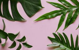 Tropical leaves on pink background Royalty Free Stock Photography