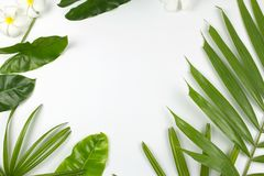 Tropical leaves and plumeria flowers on white background. With copy space. Top view. flat lay Stock Photos