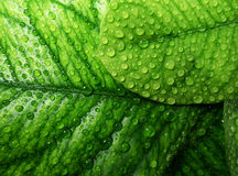 Tropical leaves with rain drops Stock Images