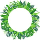 Tropical Leaves Round Frame. Border isolated on white. Floral arrangement with monstera, fern, palm fronds. Summer background with green exotic plants and space Royalty Free Stock Images