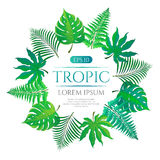 Tropical leaves round frame with place for text isolated on white background. Vector illustration in hand drawn cartoon style. Can be used for design your Stock Photos