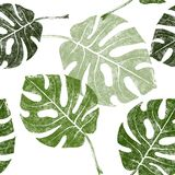 Tropical leaves seamless Royalty Free Stock Image