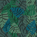 Tropical leaves seamless pattern on dark background. green palm leaves background. Stock Image